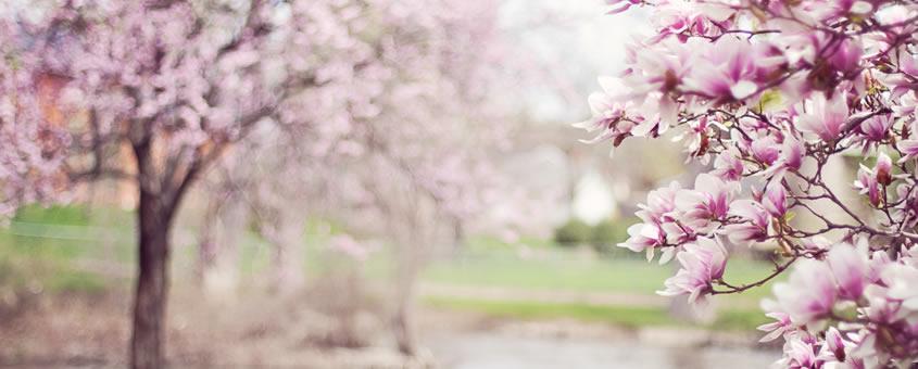Beneficios de la primavera